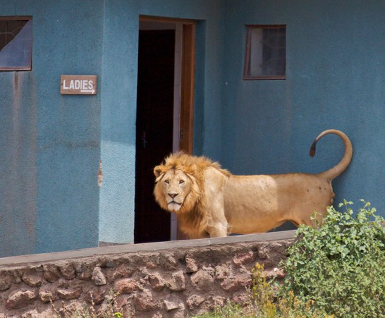 King of the Restrooms, Ngorongoro Crater