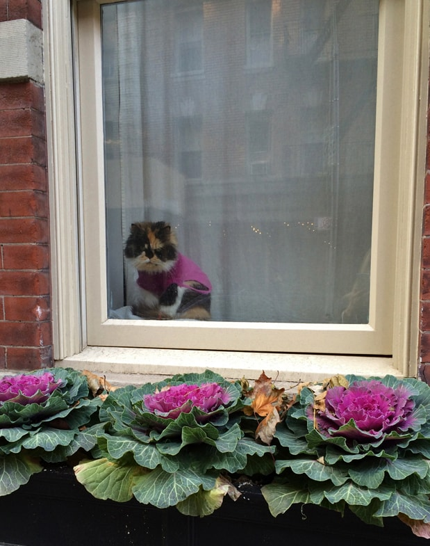 Grumpy Cat's sweater even matches the window box display.