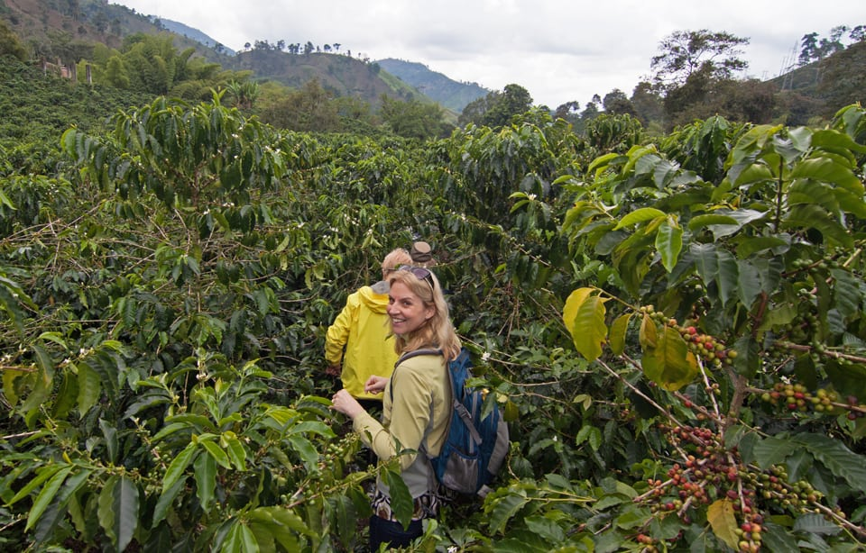 Learning about coffee production in the Coffee Triangle.