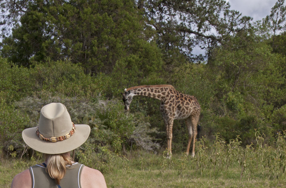 Costs for a safari run high, including national park vehicle fees that are higher for visitors than residents.