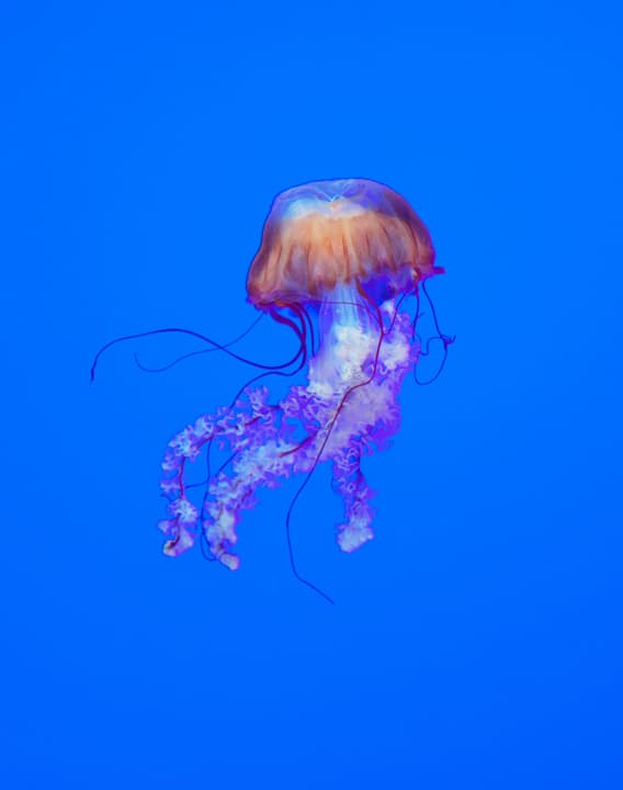 Jellyfish at Ripleys Aquarium Toronto