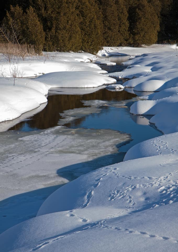 Ontario Frozen Stream with animal tracks in snow