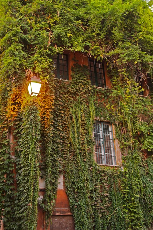 Rome Trastevere ivy-covered building