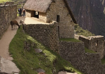 house and llamas on Machu Picchu Peru