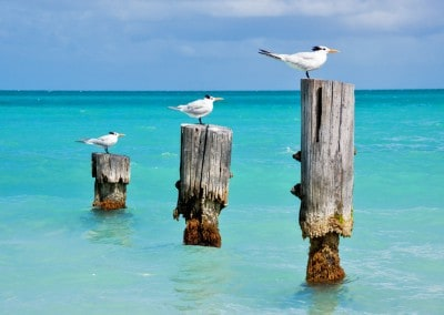 Antigua gulls on piers