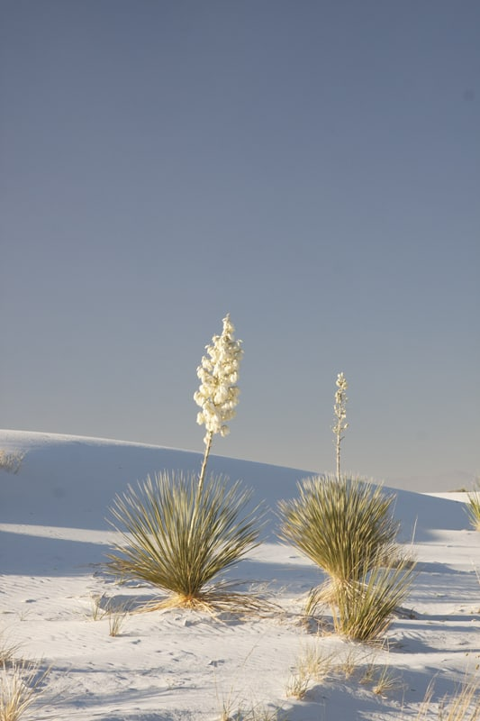 NM - White Sands