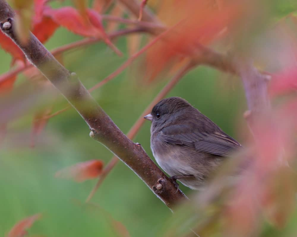 bird in red leaves