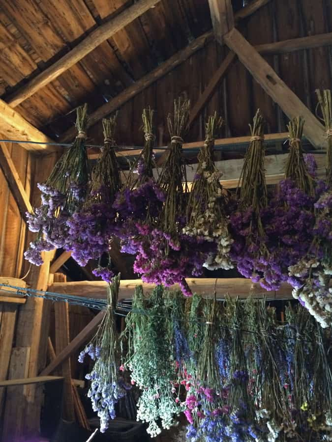 Fragrant plants dry in the loft of the 150-year old barn