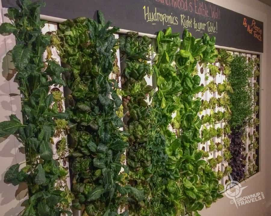 Birch & Vine Herb Wall