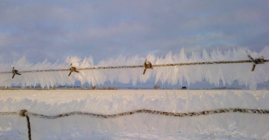 Caledon frosty barbed wire