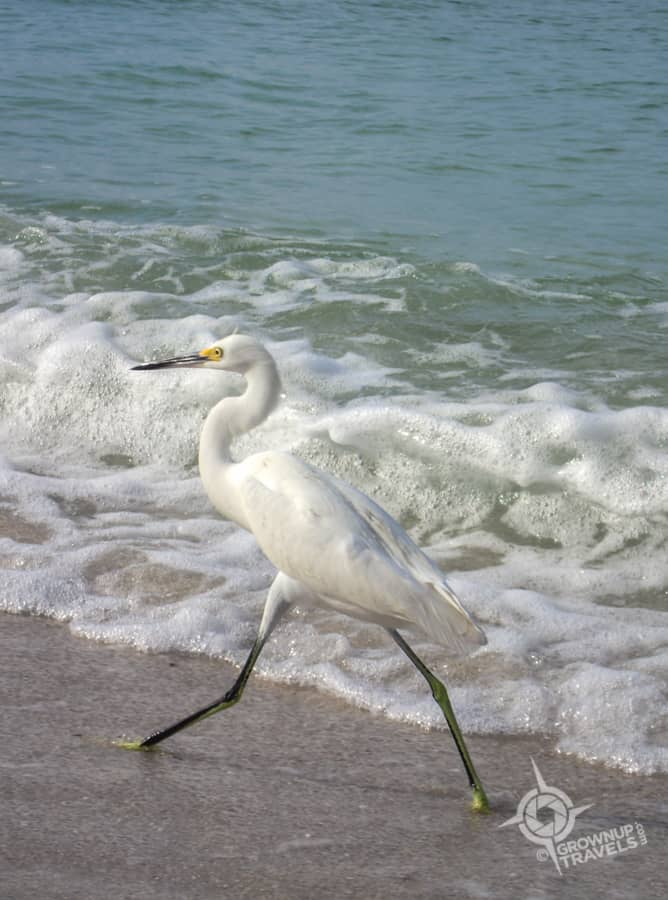 white-heron-on-Naples-Beach
