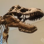 Discovering Dinosaurs and more at Toronto's #EmptyROM