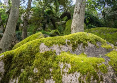 Giant moss-covered boulders Moorish Castle