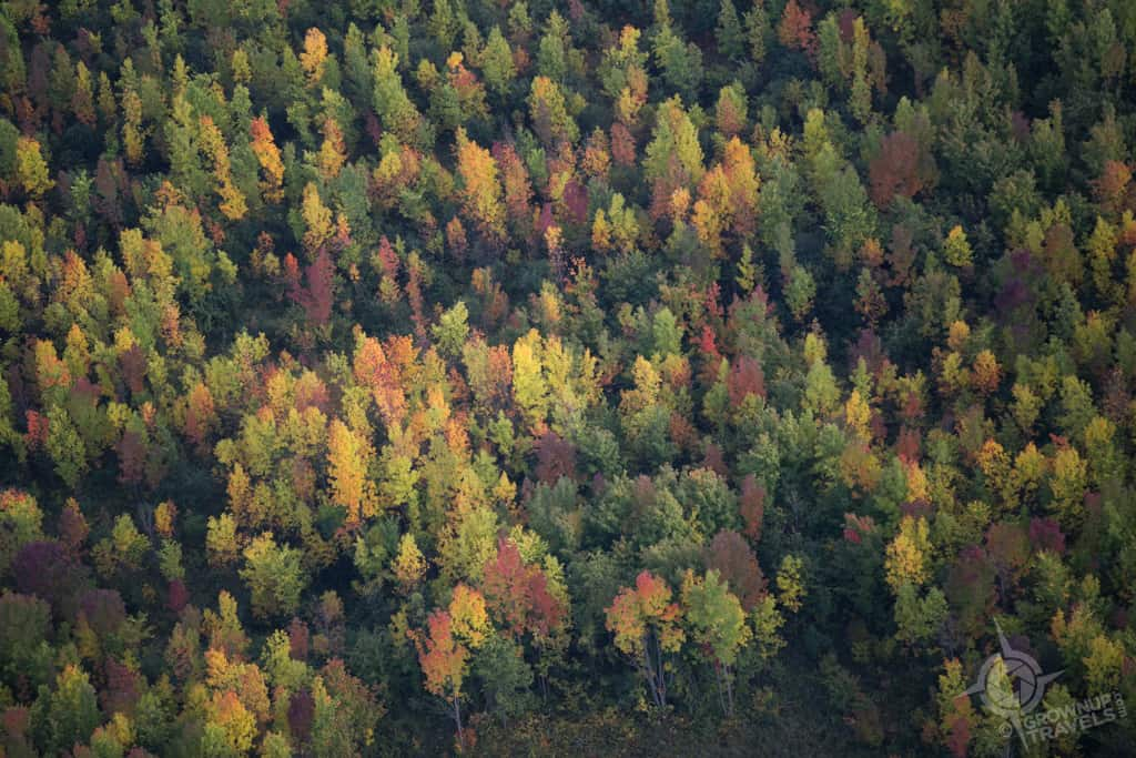pointed-trees-aerial-Grey-County