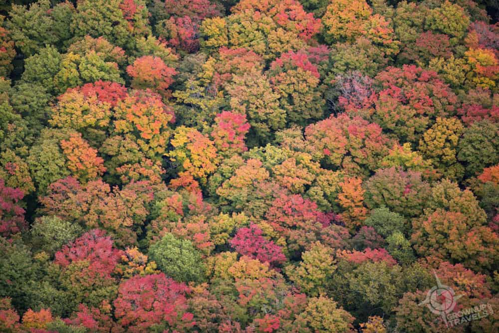 treetops in autumn colours