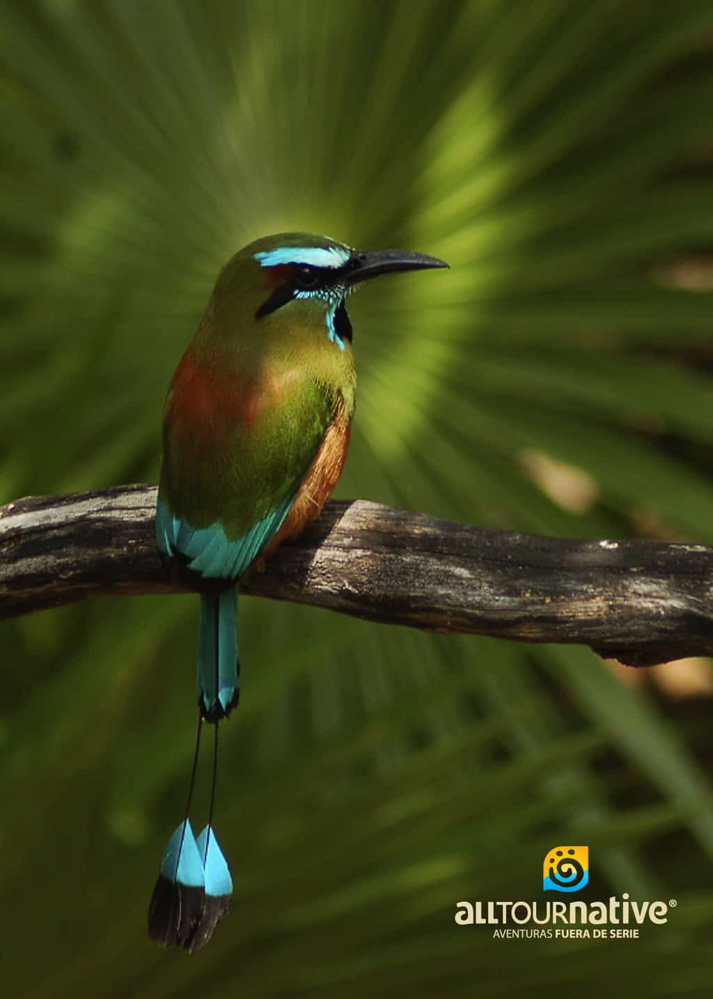 Bird photo from Cenote Maya students