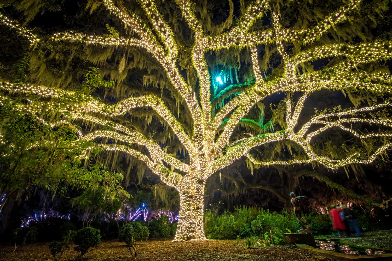 Brookgreen NOTC Oak tree lighted