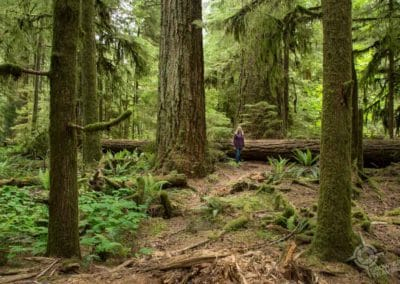 old growth forest vancouver island Cathedral Grove Jane