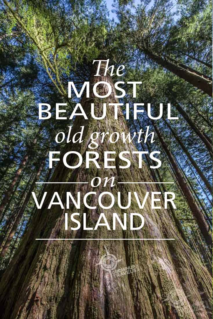 Pinterest_OldGrowth Vancouver Island