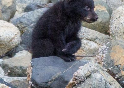 Cute bear cub on rocks