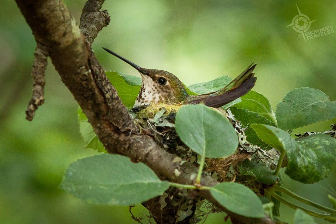 Hummingbird on nest at Free Spirit Spheres