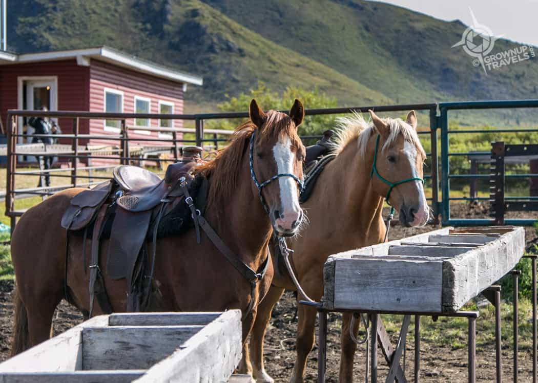 Tombstone Outfitter Horses at Base Camp