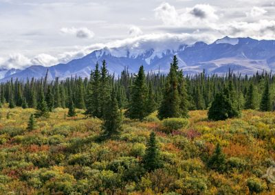 Kluane Park Mountains Yukon
