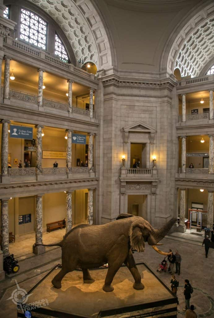 Museum of Natural History rotunda Washington
