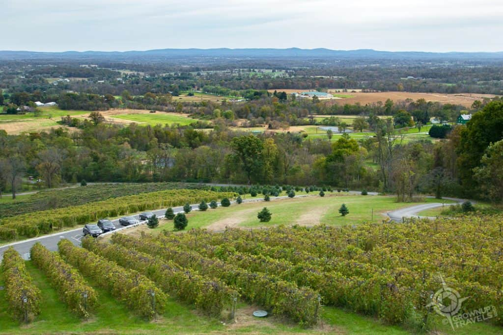 Bluemont Winery views over Loudon Valley