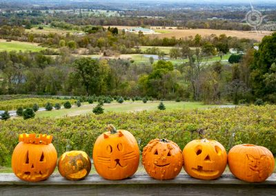 Loudoun County Bluemont Vineyards pumpkins