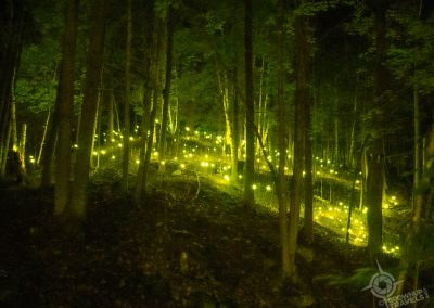 Foresta Lumina Fairy Lights Coaticook