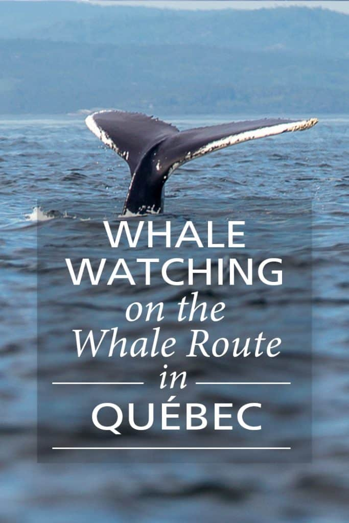 Pinterest_WhaleWatching