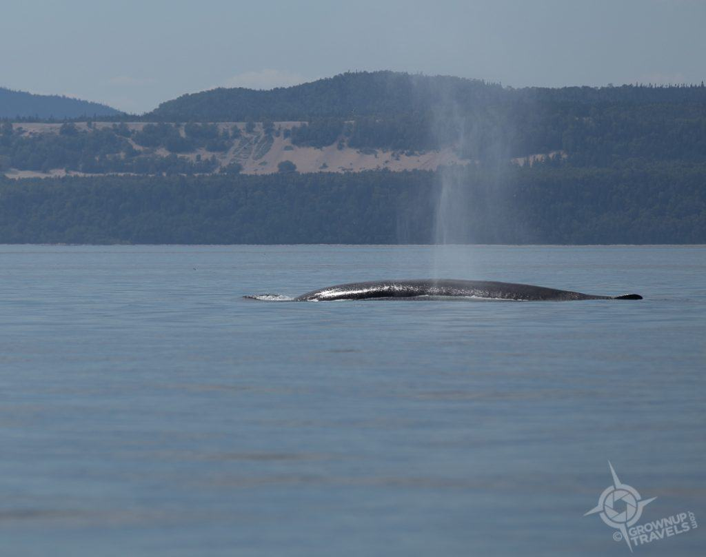 Whale Watching Fin Whale St. Lawrence