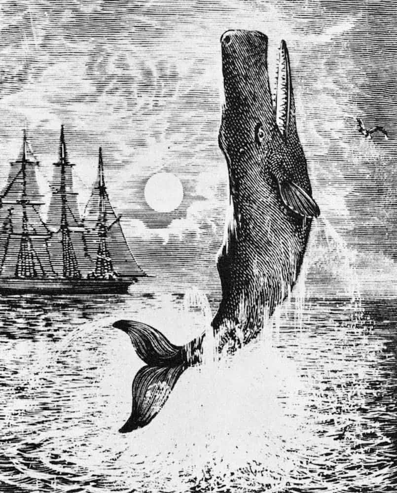 Moby Dick illustration 19th century