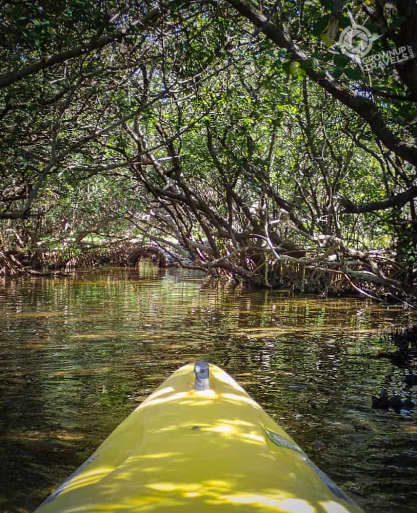 Kayaking in Fort De Soto Park Mangroves St. Pete