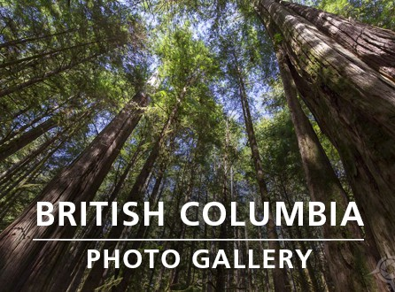 BC PHOTO GALLERY_link image